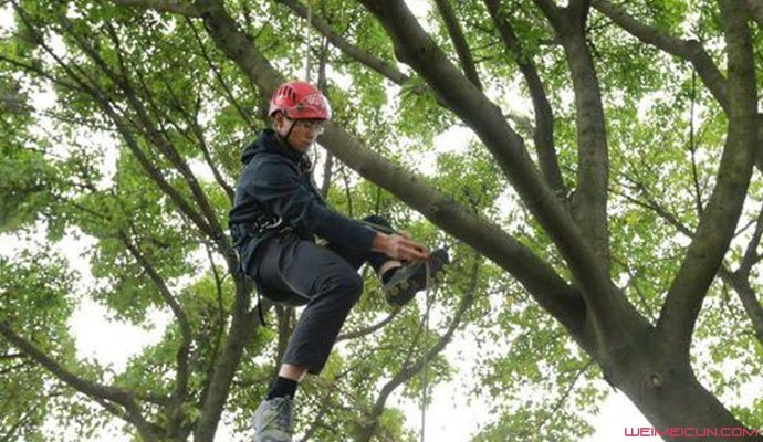 成都一高校开爬树课